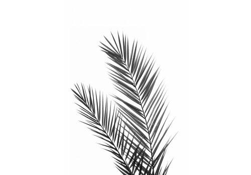 Black palm 50x70