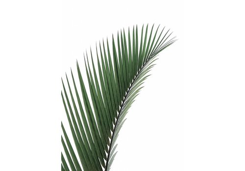 Palm Leave 30x40