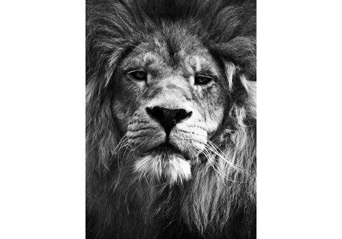 cre8design Lion 30x40