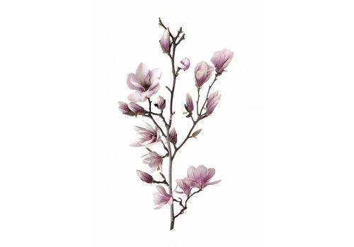 Magnolia 30x40