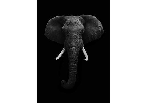 Black elephant 30x40
