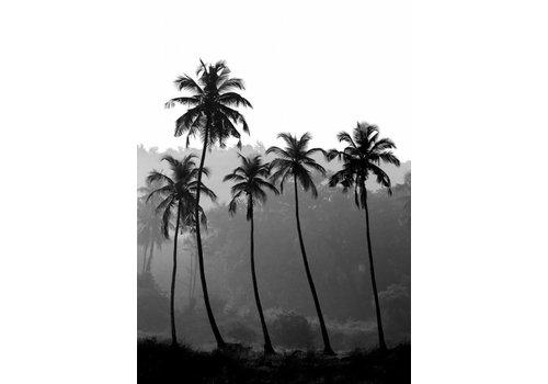 Palm Trees 30x40