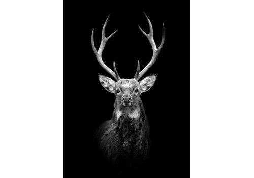 Black deer 30x40