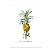 Artprint A3 - Ananas Comosus