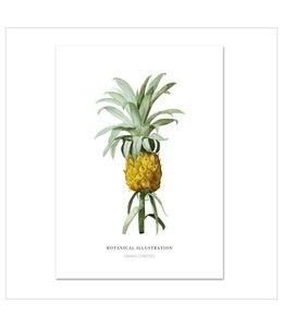 Leo La Douce Artprint A3 - Ananas Comosus