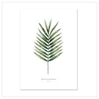 Artprint A2 - Palm Leaf