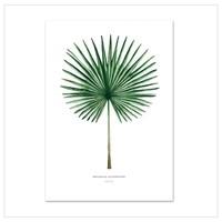 Artprint A4 - Fan Palm