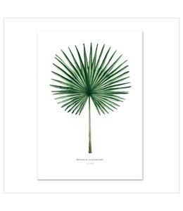 Leo La Douce Artprint A3 - Fan Palm