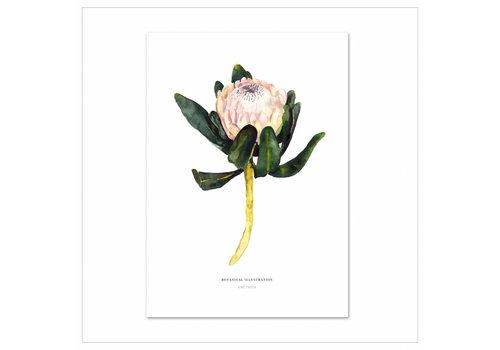 Leo La Douce Artprint A4 - Red King Protea
