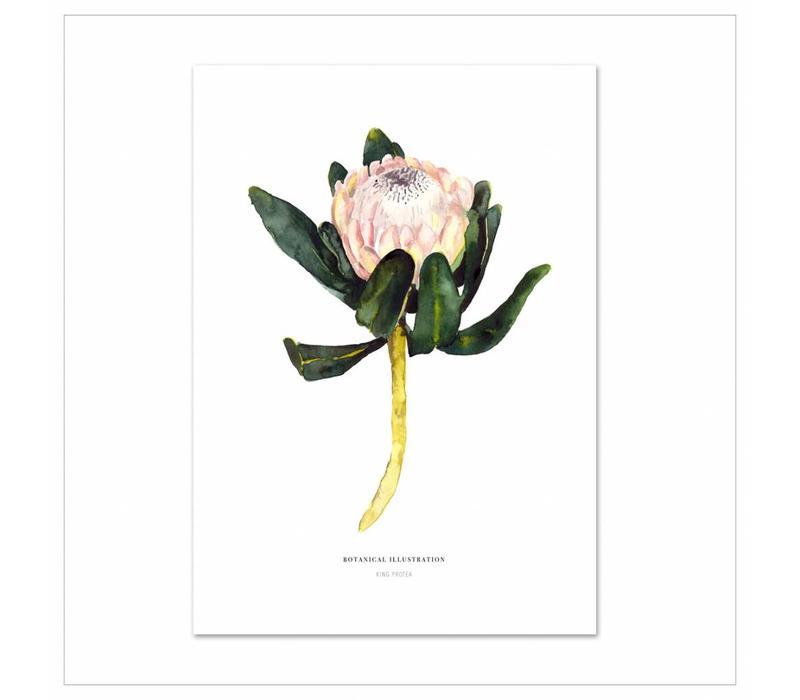 Artprint A4 - Red King Protea