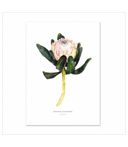 Leo La Douce Artprint A3 - Red King Protea