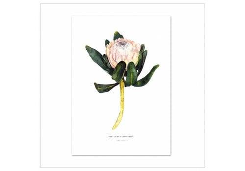 Leo La Douce Artprint A3 - Red King Protea