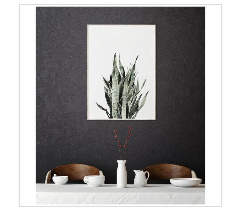 Artprint A4 - Sansevieria