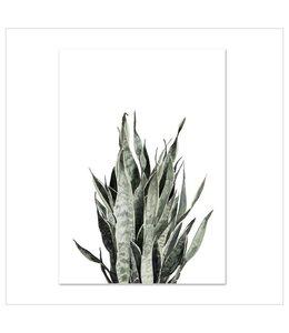 Leo La Douce Artprint A4 - Sansevieria