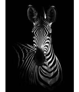 Zebra 30x40