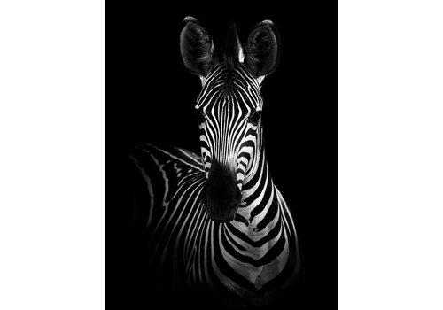 cre8design Zebra 30x40