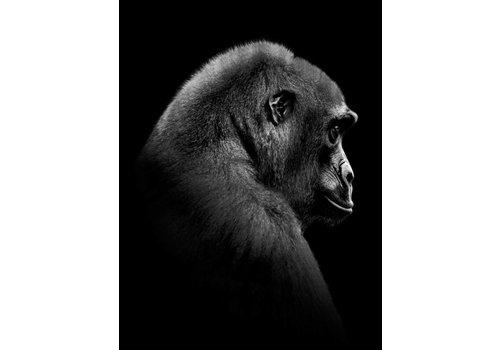 Gorilla 50x70
