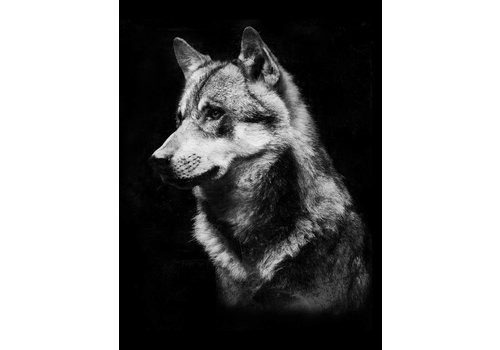 cre8design Wolf 50x70