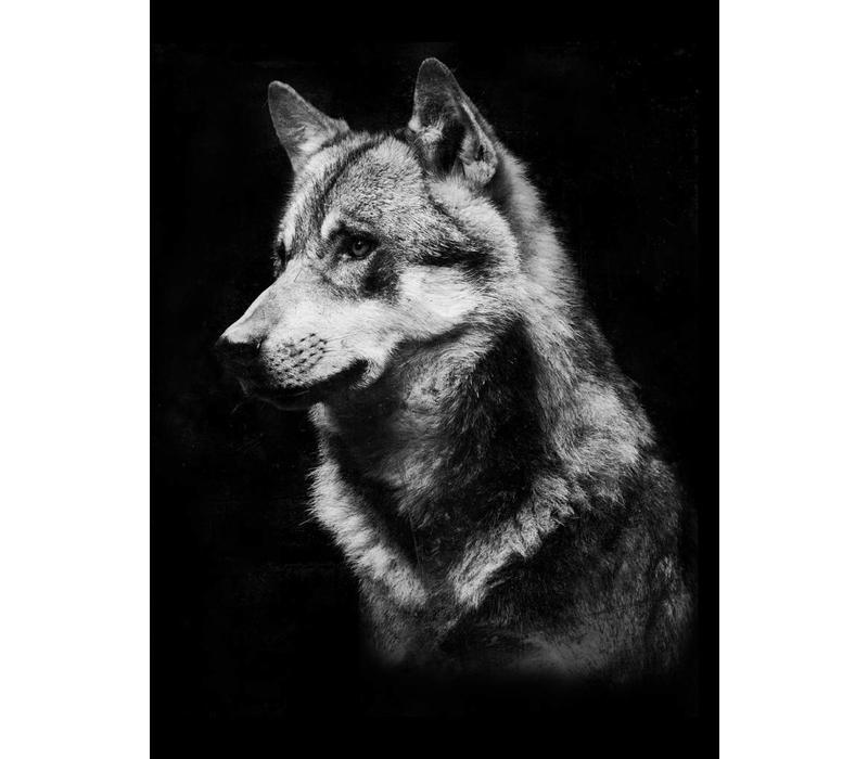 Wolf 50x70