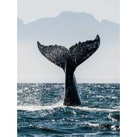 Blue Whale 50x70