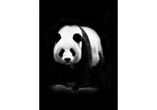 Panda 50x70