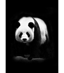 Panda 30x40