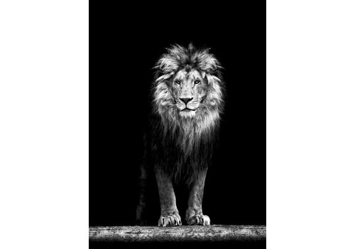 cre8design King of the jungle 30x40