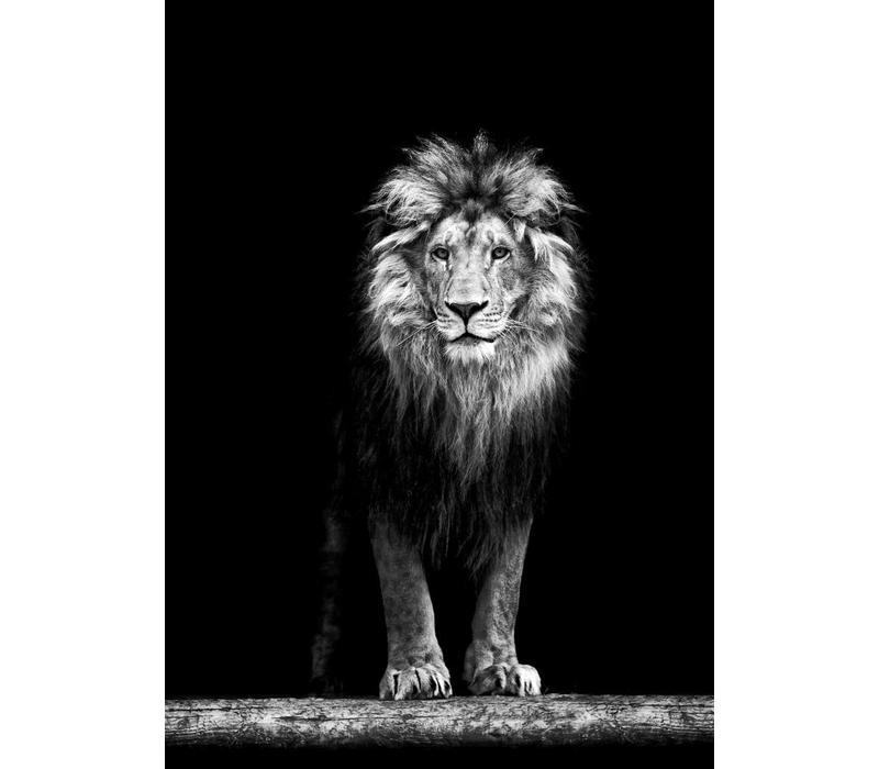 King of the jungle 50x70