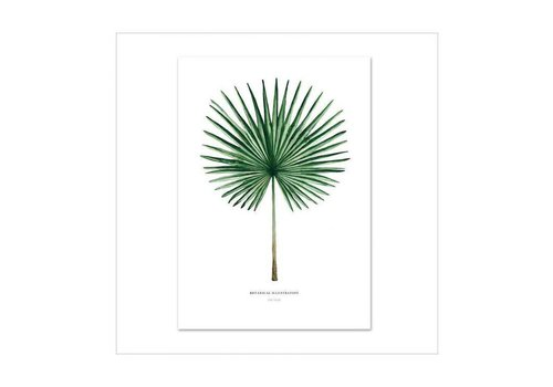 Leo La Douce Artprint A2 - Fan palm