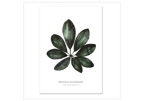 Leo La Douce Artprint A3 - Schefflera arboricola
