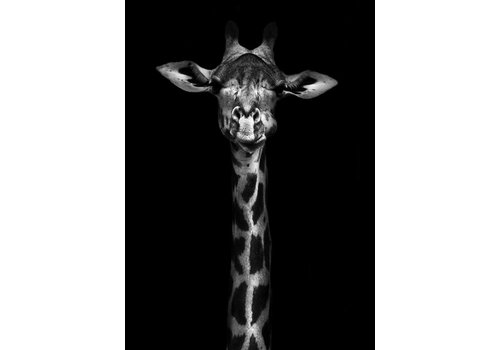 Giraffe 50x70cm