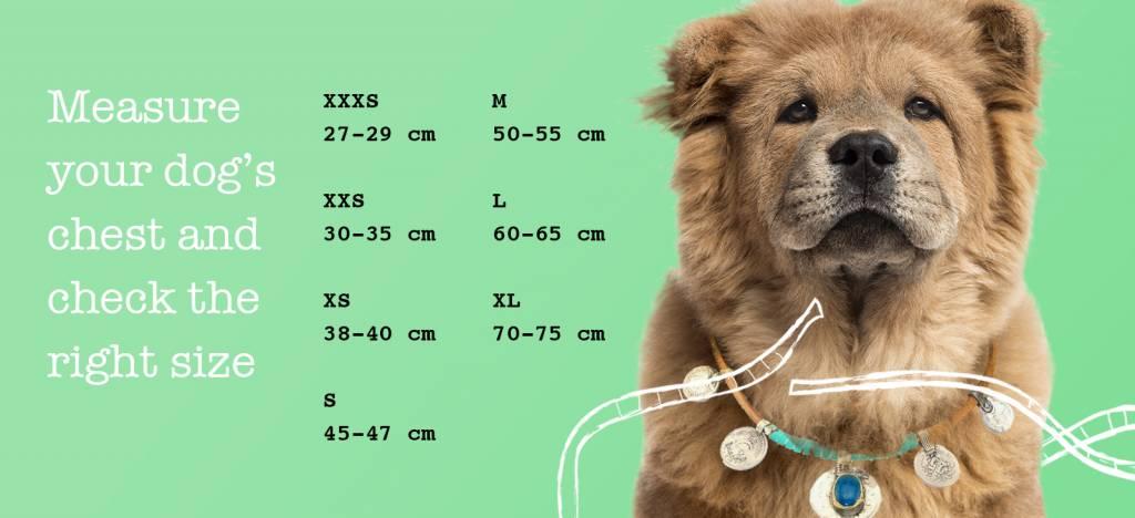 XXS (borstomvang 36-42 cm)