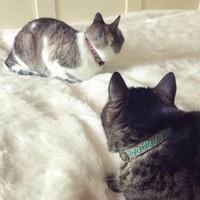 Katzenband Tommy