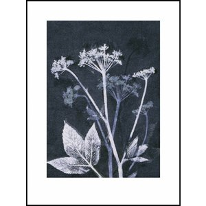 Pernille Folcarelli Ground elder blue print