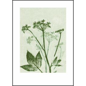 Pernille Folcarelli Ground elder green