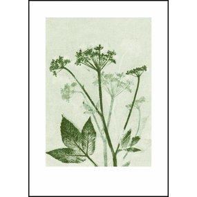 Pernille Folcarelli Ground elder green