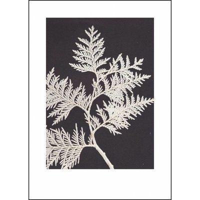 Pernille Folcarelli Thuja white print