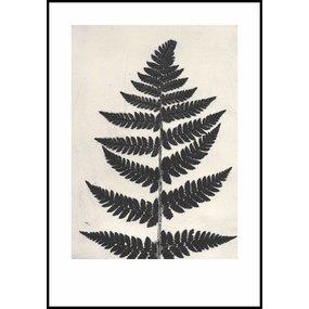 Pernille Folcarelli Fern black print