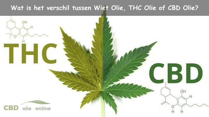 THC Olie kopen   Wat is THC Olie eigenlijk?