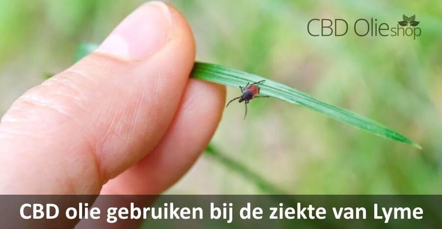 CBD olie gebruiken bij de ziekte van Lyme