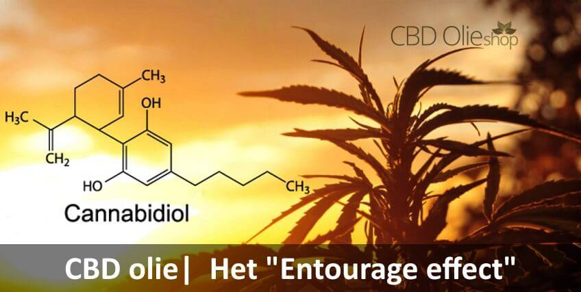 "CBD olie, Wat houd het ""Entourage effect"" in?"