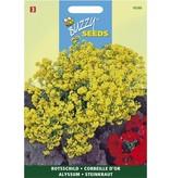 Buzzy Seeds Alyssum saxatile compacta