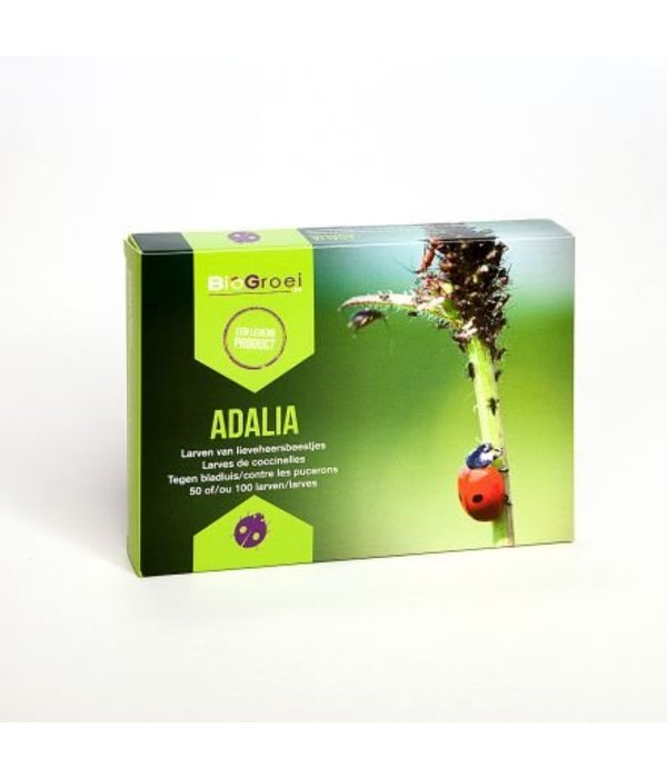 Bio Bestrijding Adalia Lieveheersbeest larven tegen bladluis