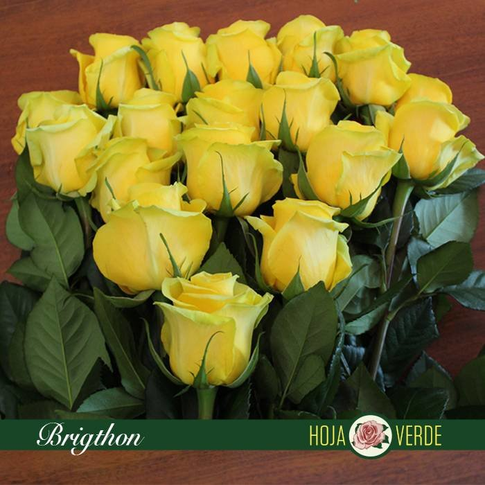 Roos Brighton, geel, uit Ecuador