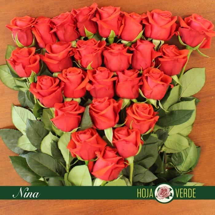 Roos Nina, rood, uit Ecuador