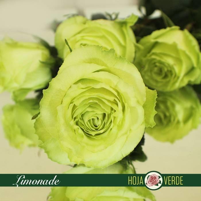 Roos Limonade, uit Ecuador