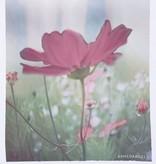 armedangels armedangels, Uma Flower, white, XS