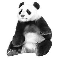 Strijkapplicatie - Panda
