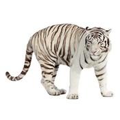 Strijkapplicatie - Tiger2