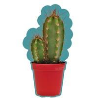 Van Ikke Strijkapplicatie - Cactus
